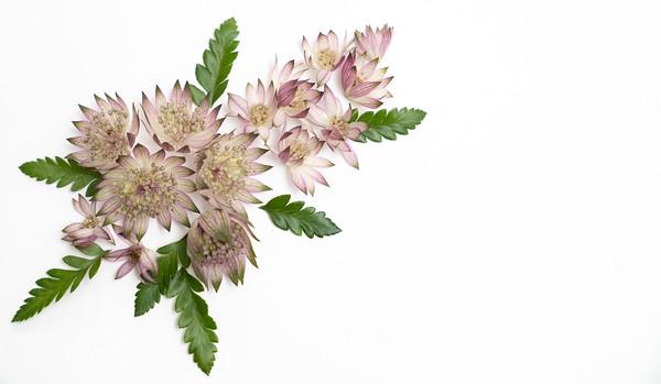 Flower Power (12)