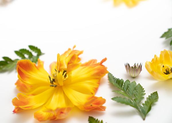 Flower Power (5)