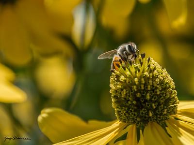 2015-08-07-Longwood-Gardens-Misc-141-4-Bee