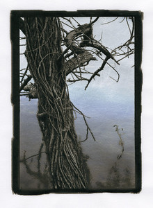 Silver leafed photograph, scanned to show more detail.