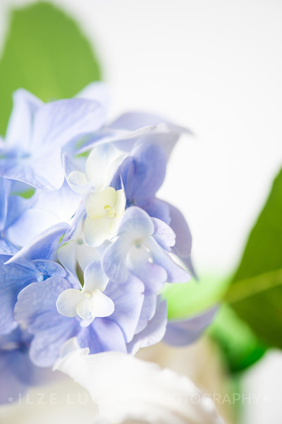 Lily Hydrangea (11)