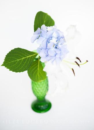 Lily Hydrangea (7)