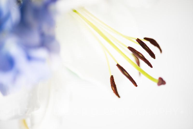 Lily Hydrangea (10)
