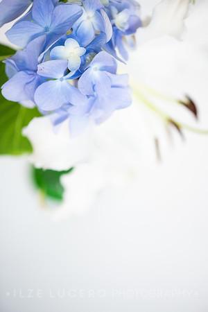 Lily Hydrangea (8)