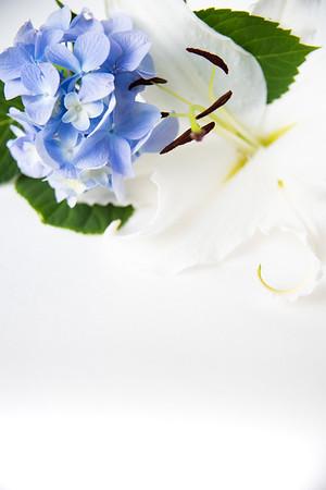 Lily Hydrangea (5)