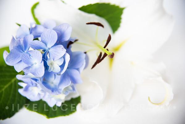 Lily Hydrangea (3)