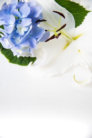 Lily Hydrangea (4)