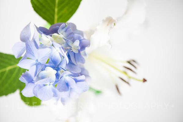 Lily Hydrangea (9)