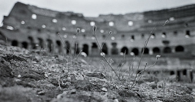 Weeds growing on a wall in the Colosseum , Rome, 1985, Kodak TX