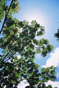 Canopy 2008  El Yunque Rainforest Puerto Rico