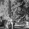 Hollywood_Cemetery_28
