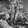 Hollywood_Cemetery_24