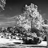 Hollywood_Cemetery_23