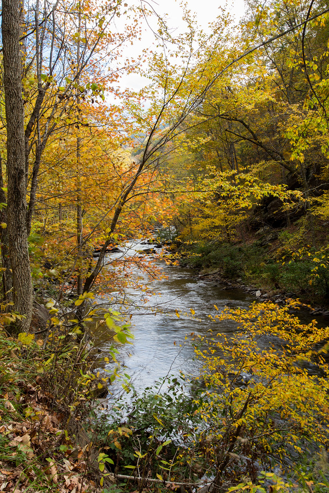 Bald River, Cherokee Forest