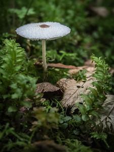 Mushroom, Discovery Park, Seattle, Washington, 2014.