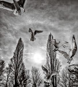 Seagulls, Magnuson Park, Seattle, Washington, 2014.