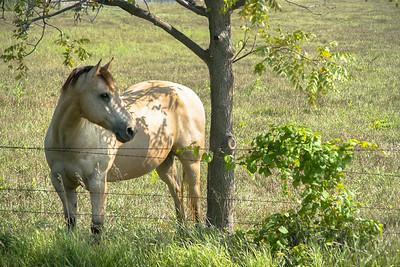 Coy horse #2