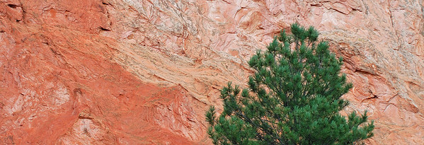 Douglas Fir, Garden of the Gods