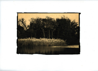 Reeds at Sunset.  Wades Point, Maryland.  Gilded Photograph on Vellum.  See Image Notes button.