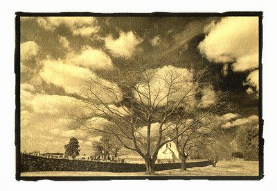 Tree Line, Hebron Valley, Virginia.  Gilded Photograph on Vellum.  See Image Notes button.
