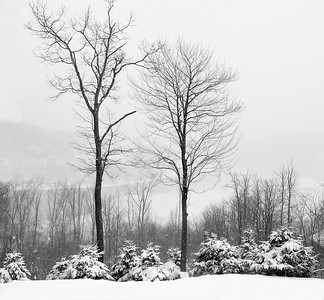 Trees in Snow, Deep Creek Lake,  Maryland.  (Not hung in show for space considerations.)