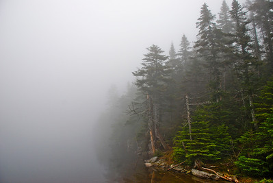 Pines in Fog: Vermont, 2007