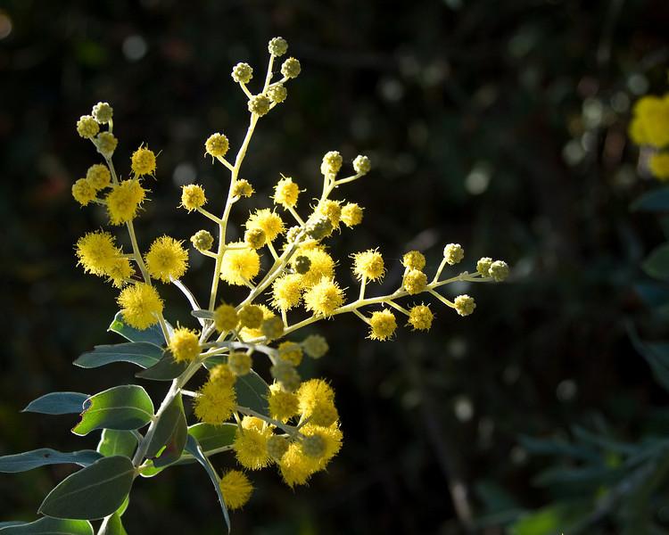 Arboretum, Santa Cruz USSC