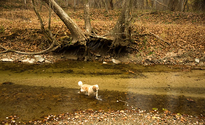 Sycamore Falls Creek with dog. Color