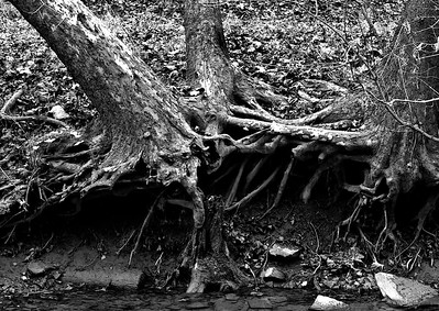 Sycamore Falls Creek Marker Unknown BW