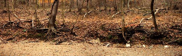 Sycamore Falls Creek: Marker 5.  Dusk.