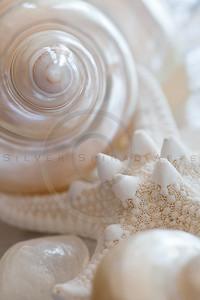 Seashell Spirals Series 5
