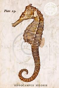 Vintage Fish - Seahorse