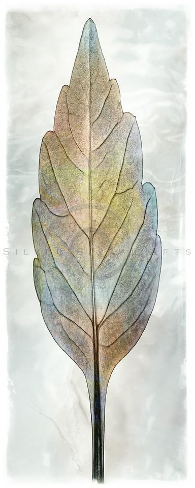 Water Gradient Leaf