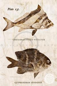 Vintage Fish - Series I