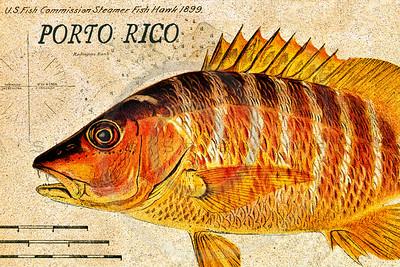 Vintage Fish - Porto Rico (Puerto Rico)