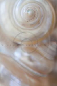 Seashell Spirals Series 6