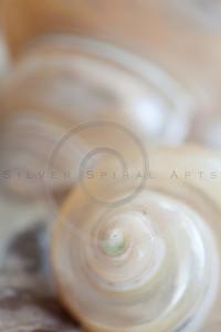 Seashell Spirals Series 8