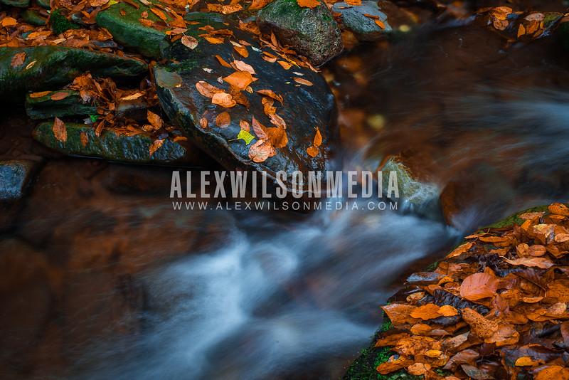 Stream near Thornwood, WV  (©J. Alex Wilson)
