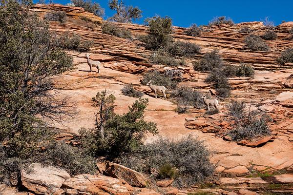 Zion National Park Series