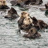 Sitka Alaska Sea Otter Series