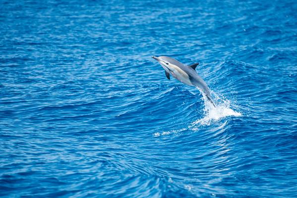 Coronado Islands Series