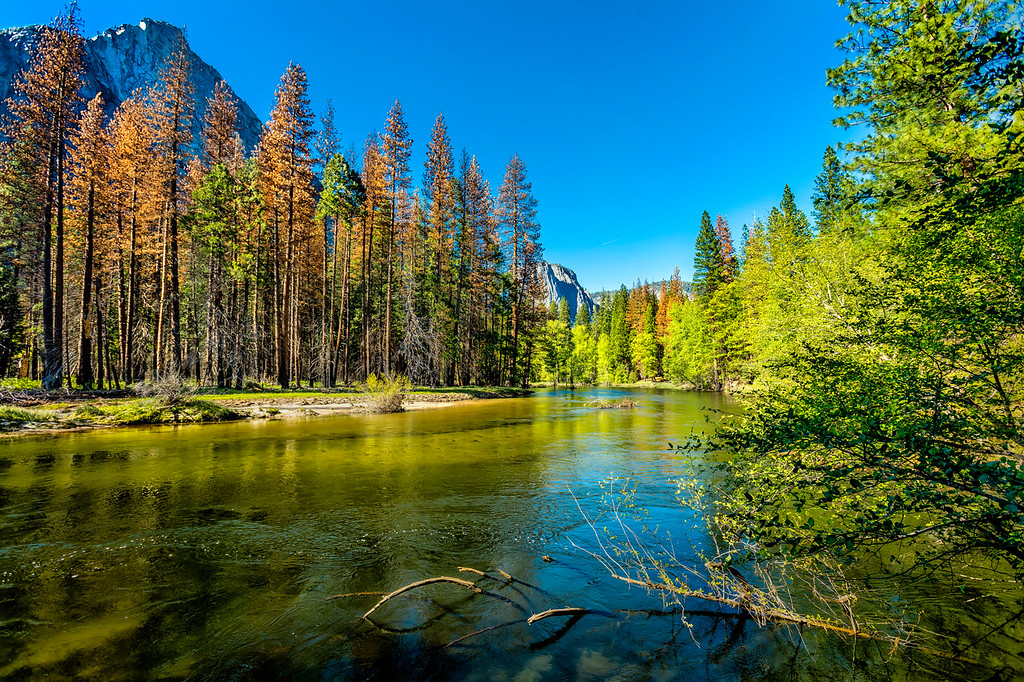 "Yosemite ""The Flow of Life"""