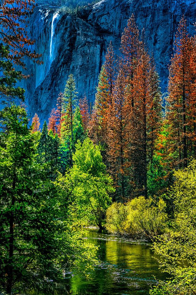 """Yosemite """" Nature's canvas"""""""