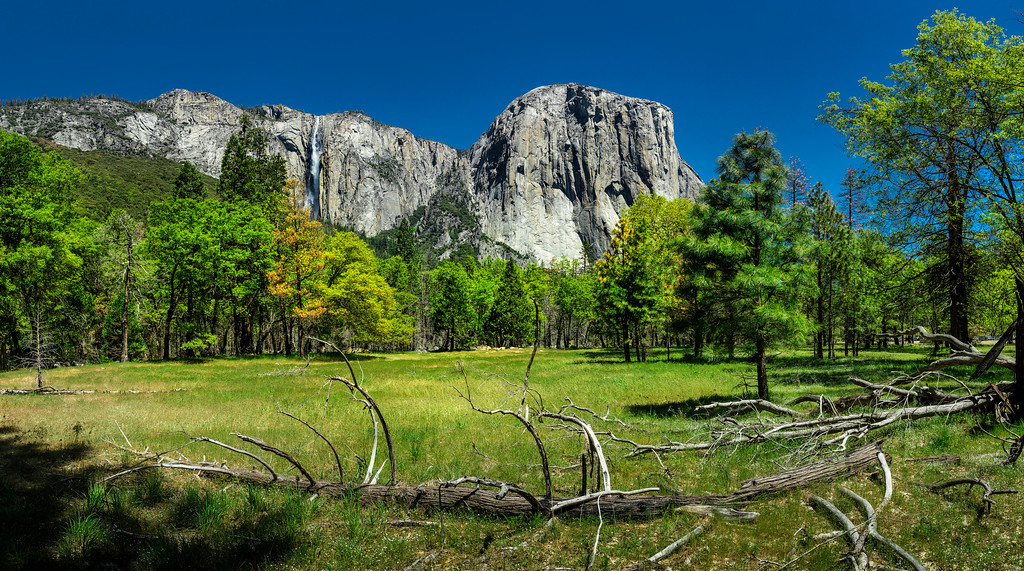 "Yosemite ""The Meadows"""
