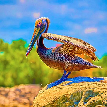Pelican on a Rock