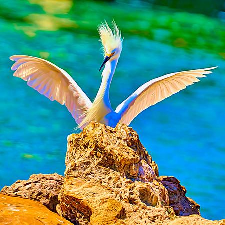 Peekaboo Egret