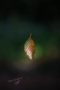Leaf and Spider Silk