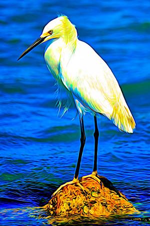 Egret on a rock