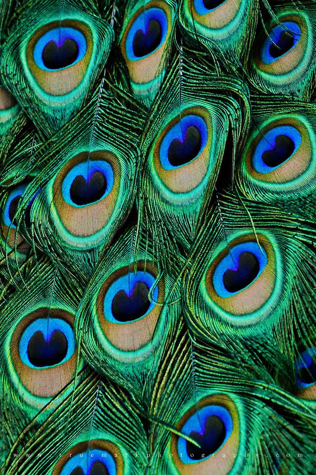 Peacock Cascade