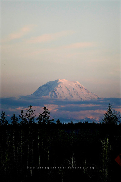 Mt. Rainier Pop Up